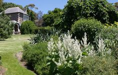 Salvia argentea by KarlGercens.com, via Flickr