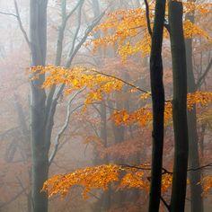 Autumn Forest by Martin Rak
