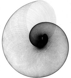 A shell like figure but showing the curve of a circle with a million different…