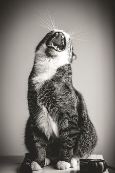 """RRAAAWWWR....   I don't like the """"weight control"""" cat food.....          Cans I have lunchmeats pleeeeeezeZ?"""