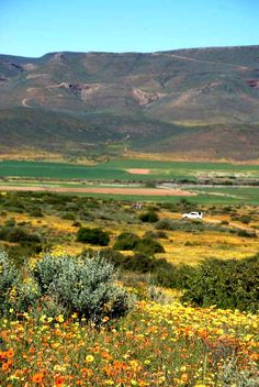 Biedou Valley in spring, South africa Most Beautiful Beaches, Beautiful Places, Places To Travel, Places To Go, National Botanical Gardens, Native Country, Living In Europe, Out Of Africa, Beaches In The World