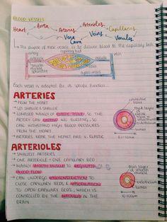 Study Biology, Biology Lessons, Life Hacks For School, School Study Tips, Nursing School Notes, Medical School, Gcse Science Revision, School Organization Notes, Medicine Notes