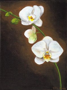 8 x 6 Realistic White Phalaenopsis Orchid by katiekoenigart, $35.00