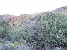 Crystal Gemstone Benitoite mine San Benito County Idria California Mining Claim