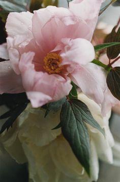 ♕ beautiful ~ photo by Tianyi Yan Pink Flowers, Pretty In Pink, Beautiful Flowers, Henri Matisse, Gardening, Flowers Nature, Beautiful Gardens, Planting Flowers, Flowers Garden