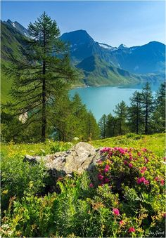 Summer in the Swiss Alps | Jan Geerck on 500px