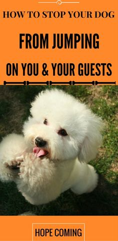 How to stop your dog from jumping on you and your guests