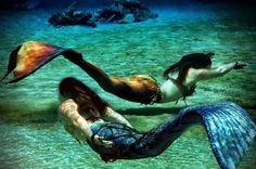 allmermaids:  MerBellas Mermaids