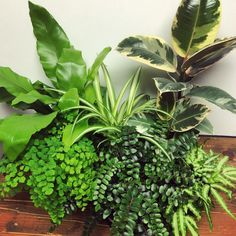 Indoor plants help clean your air and boost overall mood.