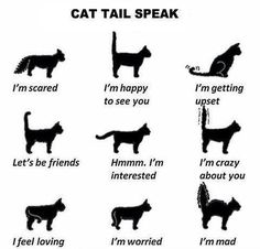 "Cat Tail Speak — Go Freak Out Your Friends And Tell Them You Can Read Cats' Minds… ""don't Do That."" ""why"" ""your Cat Doesn't Like It. He's Pissed."" ""…….how Do You Know"" - Click for More..."