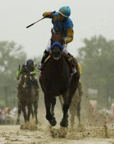 Fans hope American Pharoah, a descendant of their beloved Secretariat, becomes the next Triple Crown winner. I'm so glad he did! Preakness Winner, Preakness Stakes, The Belmont Stakes, Derby Horse, Triple Crown Winners, Derby Winners, American Pharoah, Thoroughbred Horse, Racehorse
