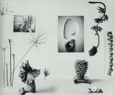 New Horizons in Flower Arrangement by Myra J. Brooks with Mary Alice and John P. Roche, M. Barrows & Co. Nothing But Flowers, Tropical, Lost Art, Floral Arrangements, Flower Arrangement, Fauna, Ikebana, Oeuvre D'art, Art Direction