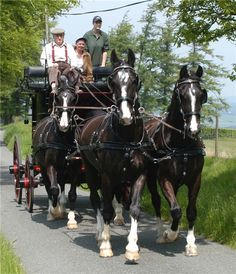 horse carriage | Tristar - Carriage Driving Team