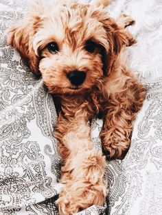 This sweet puppy cutest will make you happy. Dogs are incredible companions. Cute Baby Animals, Animals And Pets, Cute Funny Animals, Cute Dogs And Puppies, I Love Dogs, Doggies, Baby Puppies, Cute Creatures, Beautiful Creatures