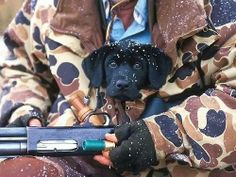 Dog Training Tips that actually work! Animals And Pets, Baby Animals, Cute Animals, Animal Babies, Duck Hunting, Hunting Dogs, Waterfowl Hunting, Hunting Humor, Cute Puppies