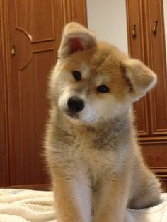 97 Best Dogs Images Pets Animal Pictures Fluffy Animals