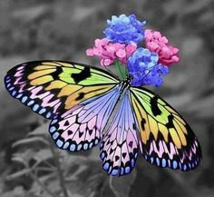 This butterfly is beautiful with the color he has. This photo is just beautiful. Beautiful Flowers Pictures, Flower Pictures, Beautiful Butterflies, Pretty Flowers, Colorful Flowers, White Flowers, Butterfly Kisses, Butterfly Flowers, Butterfly Wings