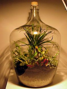 A Self-Contained World: How to Make Your Own Bottle Garden. #garden #Terrarium #diy