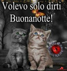 Italian Life, Good Morning Good Night, Say Hello, Funny Images, Kitty, Facebook, Catania, Bookmarks, Google