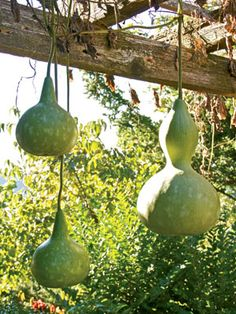 Gourd Times | Rodale's Organic Life