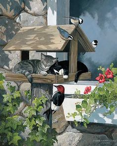 Do Not Disturb-Cats by Persis Clayton Weirs