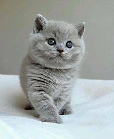 cute cat ☆ Follow On INSTA @love_ushi PINTEREST @ANAM SIDDIQUI