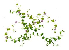 10 Free Plants & Flowers PNG Images- at Dzzyn.com -Vine Leaves for the wall