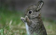 Fotos de animales: wallpapers de conejitos y otros roedores