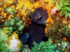 Azores: Diving's Best Kept Secret by Mary Frances Emmons   SportDiver