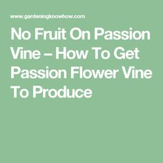 No Fruit On Passion Vine – How To Get Passion Flower Vine To Produce