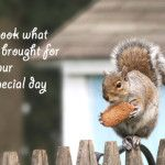 Funny animal birthday cards