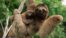 11 Things I'm Sure You Don't Know About Sloths