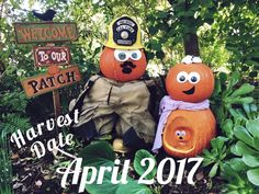 Our Pumpkin Pregnancy Announcement. Firefighter pregnancy announcement Firefighter Pregnancy Announcement, Pumpkin Pregnancy Announcement, Firefighter Halloween, Harvest, Patches, October, Christmas Ornaments, Holiday Decor, Baby
