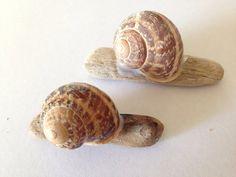 Driftwood Craft Ideasdivine Snails Snail Shell Ideas Kids Homemade