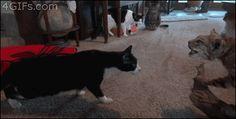 Kitty terrors