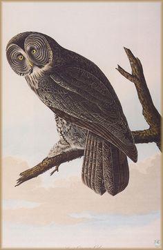 Canada Goose womens replica shop - 1000+ ideas about John James Audubon on Pinterest | Natural ...