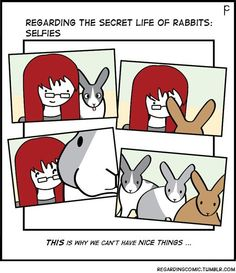 Bunny selfies are the best! Bunny Meme, Funny Bunnies, Baby Bunnies, Cute Bunny, Rabbit Life, House Rabbit, Pet Rabbit, Secret Life Of Rabbits, All About Rabbits