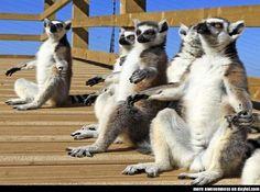 The Lemur God