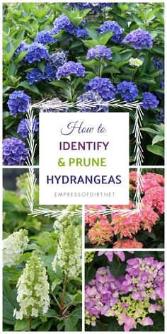 hydrangea garden care Gardening Tips Ireland soon Organic Gardening Tips And Tricks. Terrace Garden Tips For Beginners Garden Shrubs, Lawn And Garden, Shade Garden, Garden Plants, Terrace Garden, Box Garden, Pruning Hydrangeas, Types Of Hydrangeas, Planting Flowers