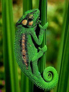Emerald in nature