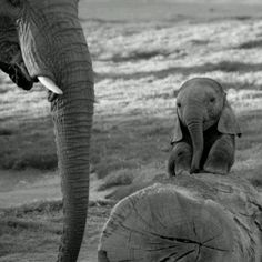 Can't get over how cute this is!