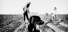 Spellbinding Photos of California's Central Valley Reveal the Dark Side of America's Agricultural Industry - Feature Shoot Magnum Photos, Documentary Photography, Video Photography, Amazing Photography, Medan, Black Photography, Street Photography, Central Valley, Photographer Portfolio