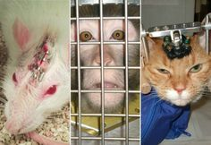 Sua maquiagem mata coelhinhos? Saiba como comprar cosméticos livres de crueldade - Fotos - R7 Moda e Beleza