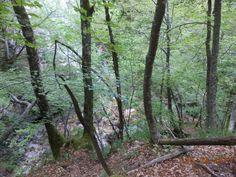 La mia escursione alla Camosciara nel Parco Nazionale d'Abruzzo. By Tiffany blogger