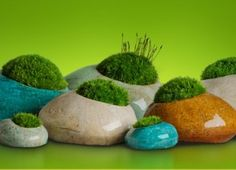 Moss Gardening