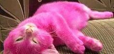 01-gato-pintado-rosa.jpg (602×290)