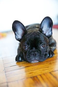 My hubby shall get me a brindle french bulldog:) amd i shall name him Xerxes. (OR Minnie if its a gal)