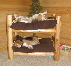 Dog Bunk Beds for Large Dogs . Dog Bunk Beds for Large Dogs . Two Story Dog Bed Dogcrateoutdoor Dog Bunk Beds, Pet Beds, Puppy Beds, Doggie Beds, Pet Puppy, Dog Furniture, Furniture Making, Animals And Pets, Cute Animals