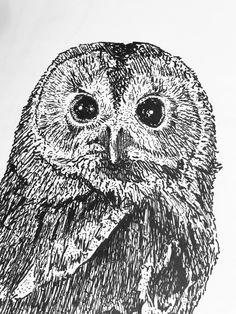 Detail Owl 2017 Owl, Fine Art, Bird, Detail, Illustration, Animals, Animaux, Owls, Birds