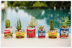 DIY Succulent Party Favors | Camille Styles - I like the idea of cactuses in Mexican tins...Cinco de Mayo!